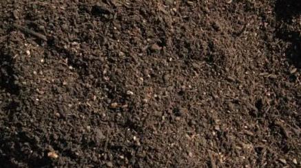 ziemia i podłoże do sadzonek hortensji bukietowych
