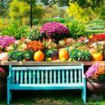 Twój piękny ogród – zdjęcie
